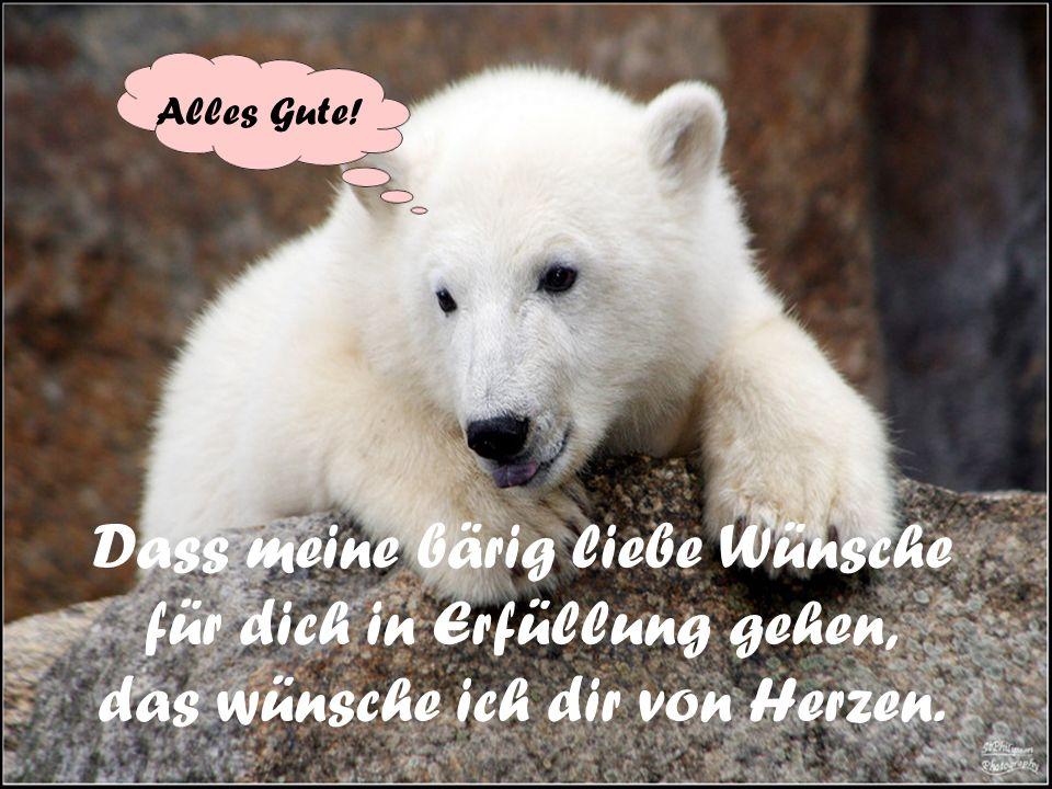Sei stolz auf dich, wenn du einen Bärenerfolg zu feiern hast! Yippie!!!