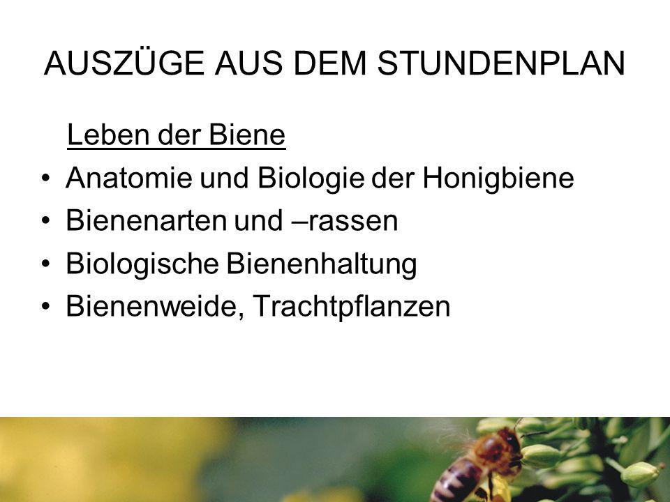 AUSZÜGE AUS DEM STUNDENPLAN Leben der Biene Anatomie und Biologie der Honigbiene Bienenarten und –rassen Biologische Bienenhaltung Bienenweide, Tracht