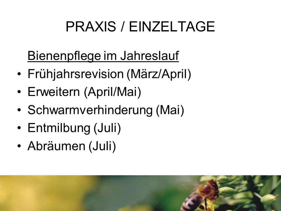 PRAXIS / EINZELTAGE Bienenpflege im Jahreslauf Frühjahrsrevision (März/April) Erweitern (April/Mai) Schwarmverhinderung (Mai) Entmilbung (Juli) Abräumen (Juli)