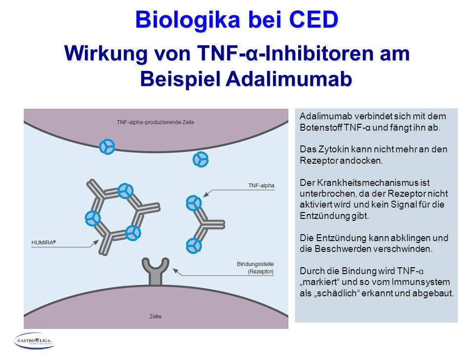 Biologika bei CED Wirkung von TNF-α-Inhibitoren am Beispiel Adalimumab Adalimumab verbindet sich mit dem Botenstoff TNF-α und fängt ihn ab. Das Zytoki