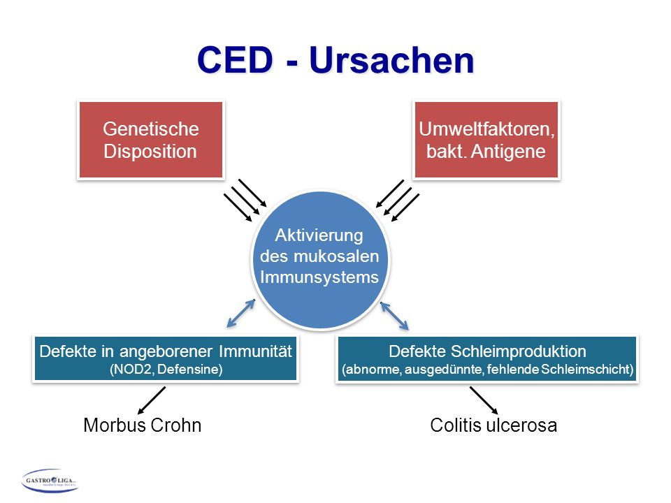 CED - Ursachen Genetische Disposition Umweltfaktoren, bakt. Antigene Aktivierung des mukosalen Immunsystems Defekte in angeborener Immunität (NOD2, De