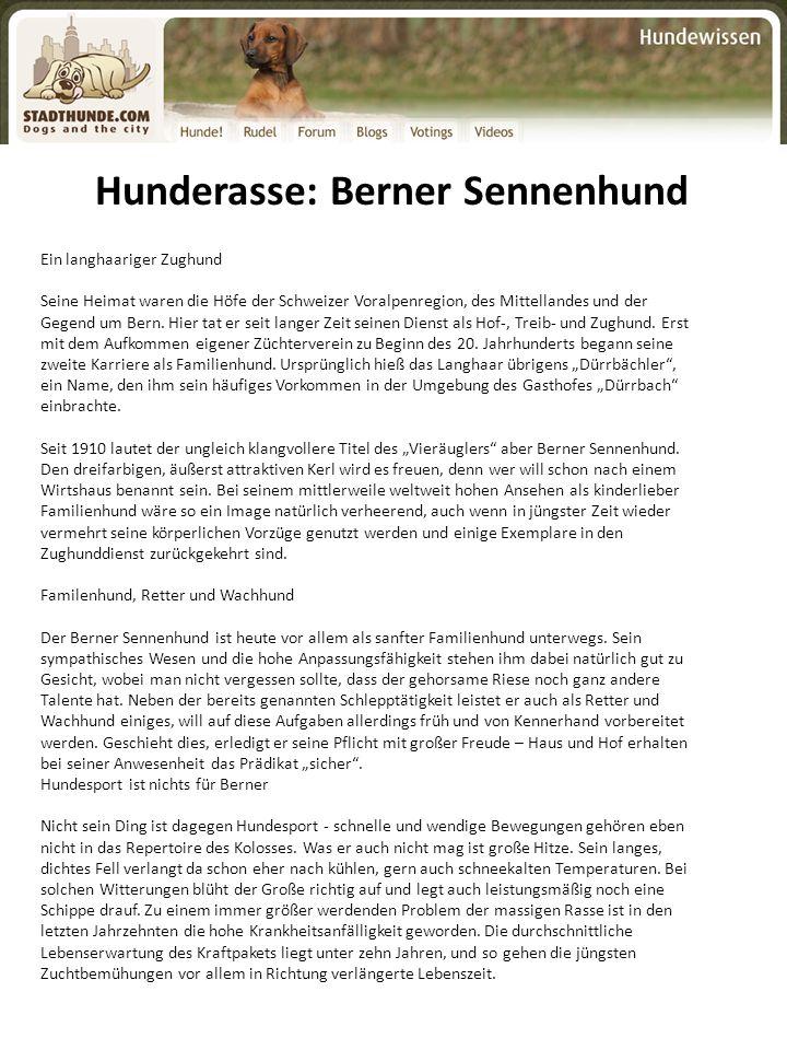 Hunderasse: Berner Sennenhund Ein langhaariger Zughund Seine Heimat waren die Höfe der Schweizer Voralpenregion, des Mittellandes und der Gegend um Be
