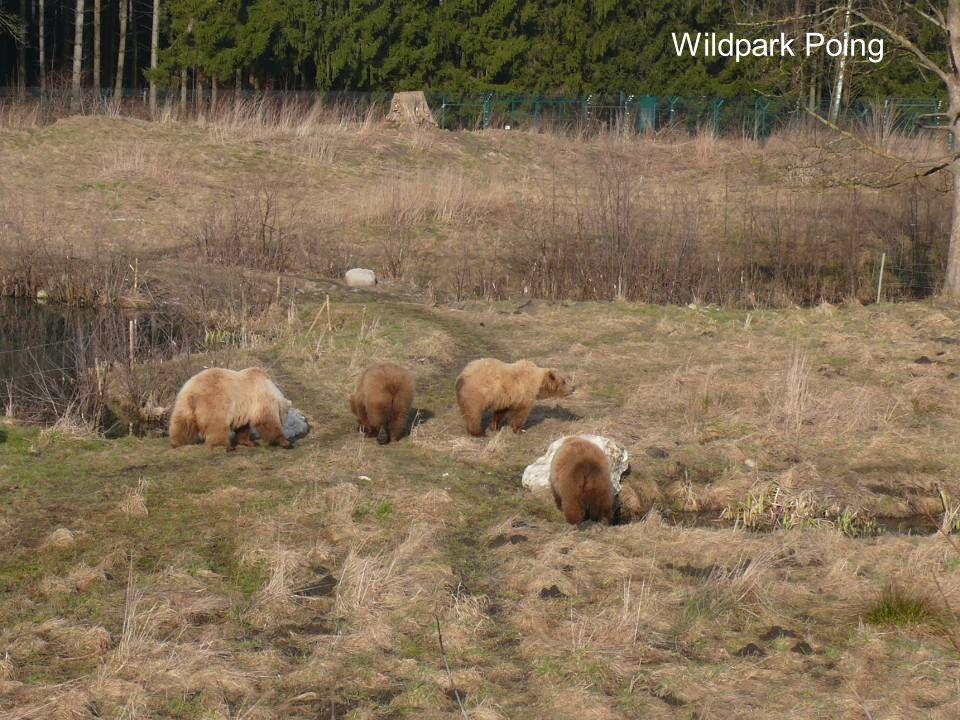 Anforderungen des Gutachtens 2014  Beim Flächenbedarf wird nach Bärenarten und -unterarten differenziert.