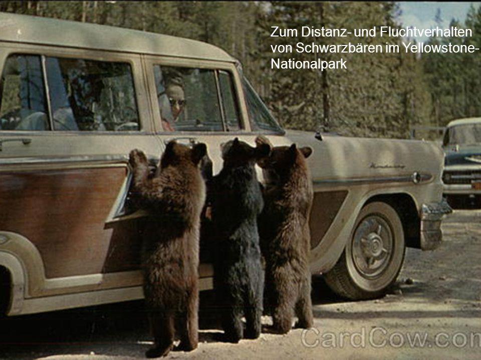 Forderungen der Tierschutzorganisationen Stellungnahme von VIER PFOTEN zur Bärenhaltung Um dem Distanz- bzw.