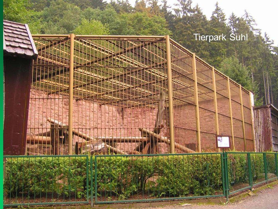 Trockengräben für Braunbären sind mindestens 3 m breit, davor ebenfalls eine Pufferzone.