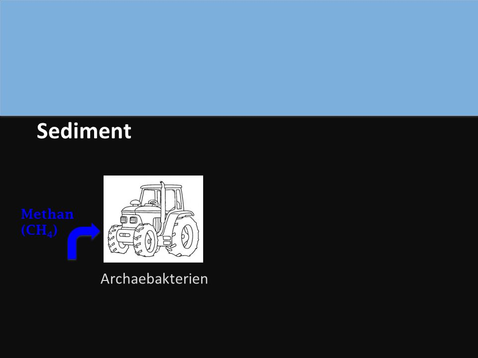 Archaebakterien Sediment Methan (CH 4 )