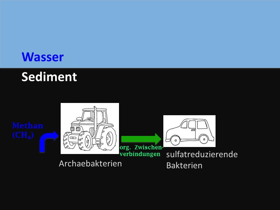 Archaebakterien sulfatreduzierende Bakterien Sediment Wasser Methan (CH 4 ) org.