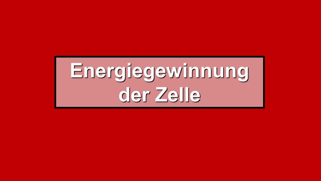 Energiegewinnung der Zelle