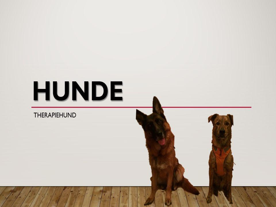 Übersicht Hunde – Abstammung – Sinne – Hundesprache – Rassen – Mischlinge – Mensch und Hund Anschaffung eines Hundes – Krankheiten Der Therapiehund 18.09.2015 2