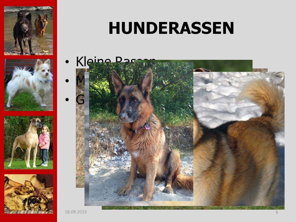 HUNDERASSEN Kleine Rassen Mittelgroße Rassen Große Rassen 18.09.2015 6