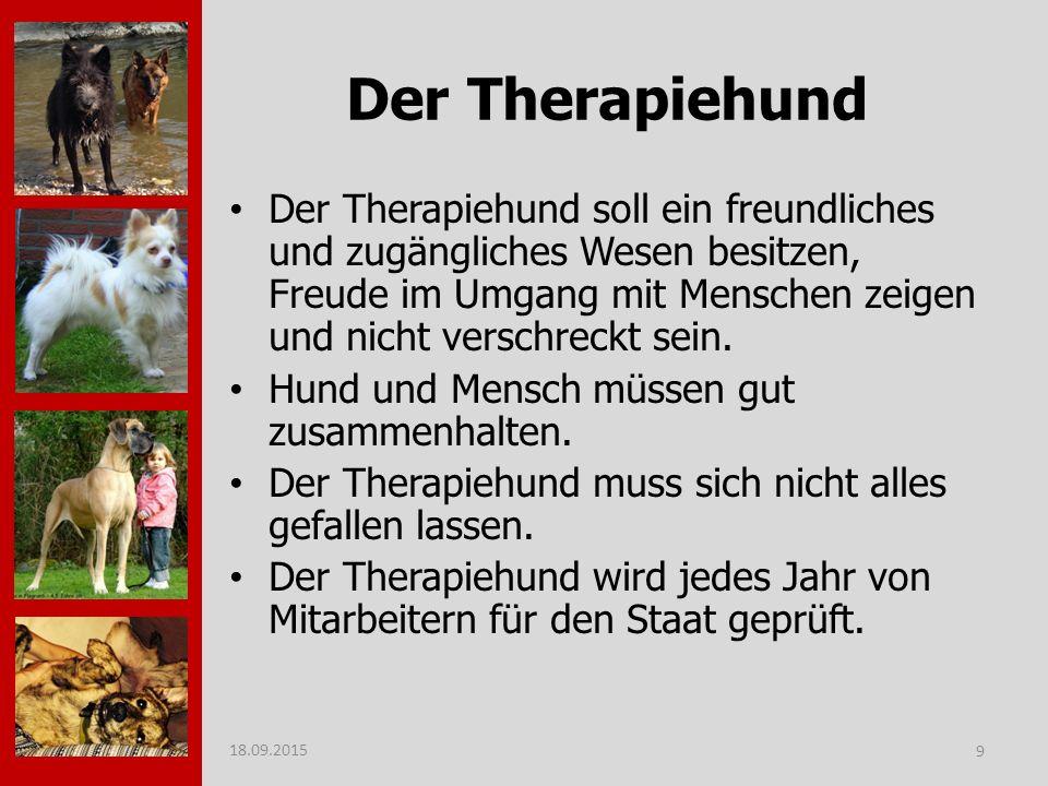 Der Therapiehund Der Therapiehund soll ein freundliches und zugängliches Wesen besitzen, Freude im Umgang mit Menschen zeigen und nicht verschreckt sein.