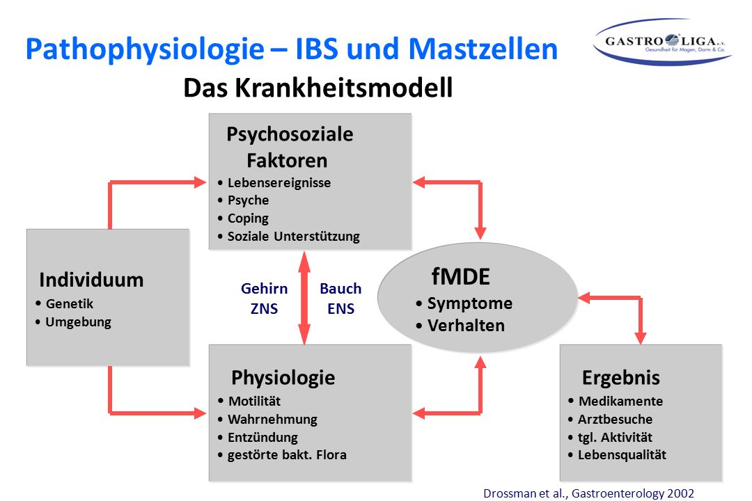 Bauch ENS Gehirn ZNS Psychosoziale Faktoren Lebensereignisse Psyche Coping Soziale Unterstützung fMDE Symptome Verhalten Physiologie Motilität Wahrneh
