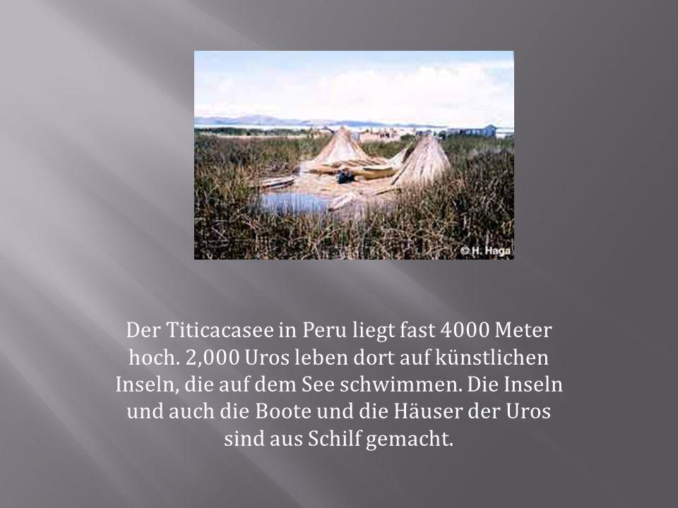 Der Titicacasee in Peru liegt fast 4000 Meter hoch. 2,000 Uros leben dort auf künstlichen Inseln, die auf dem See schwimmen. Die Inseln und auch die B
