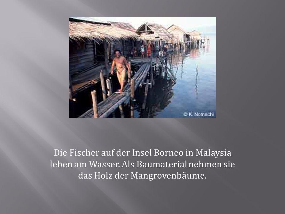 Die Fischer auf der Insel Borneo in Malaysia leben am Wasser. Als Baumaterial nehmen sie das Holz der Mangrovenbäume.