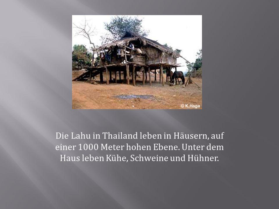 Die Lahu in Thailand leben in Häusern, auf einer 1000 Meter hohen Ebene. Unter dem Haus leben Kühe, Schweine und Hühner.