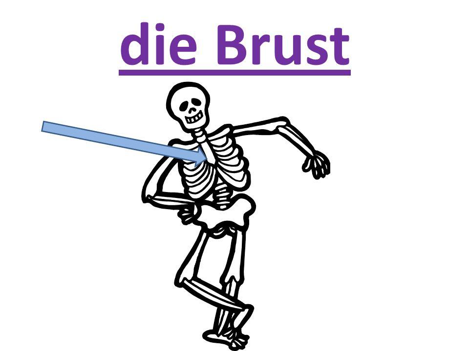 die Brust