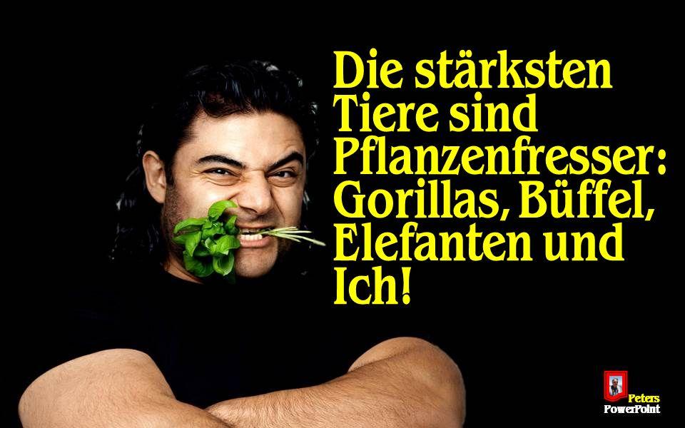 PetersPowerPoint Die stärksten Tiere sind Pflanzenfresser: Gorillas, Büffel, Elefanten und Ich!