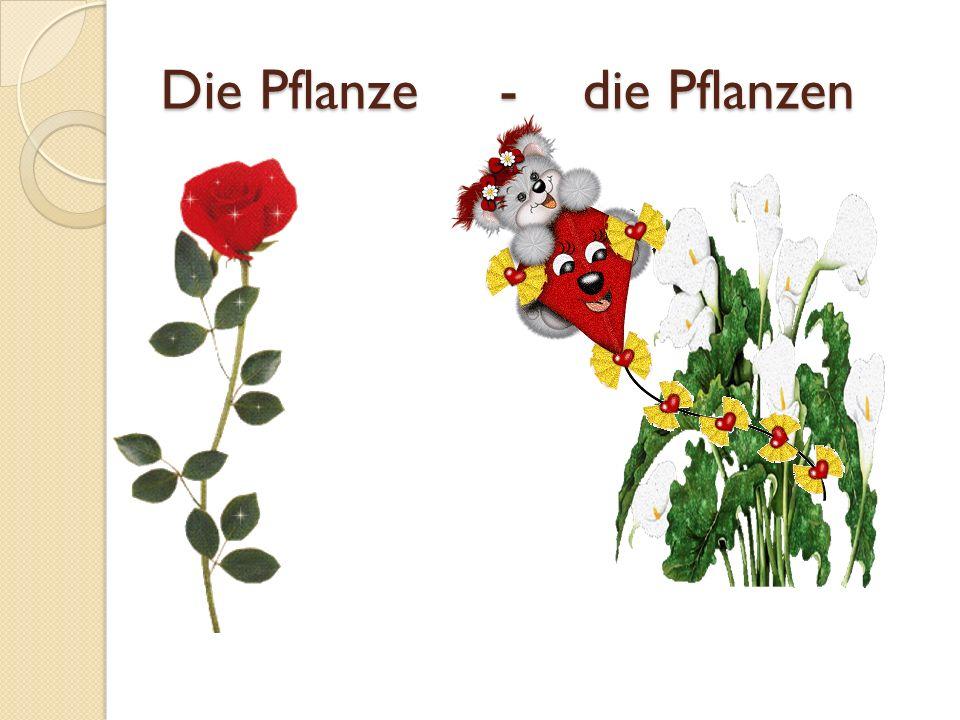Die Pflanze - die Pflanzen