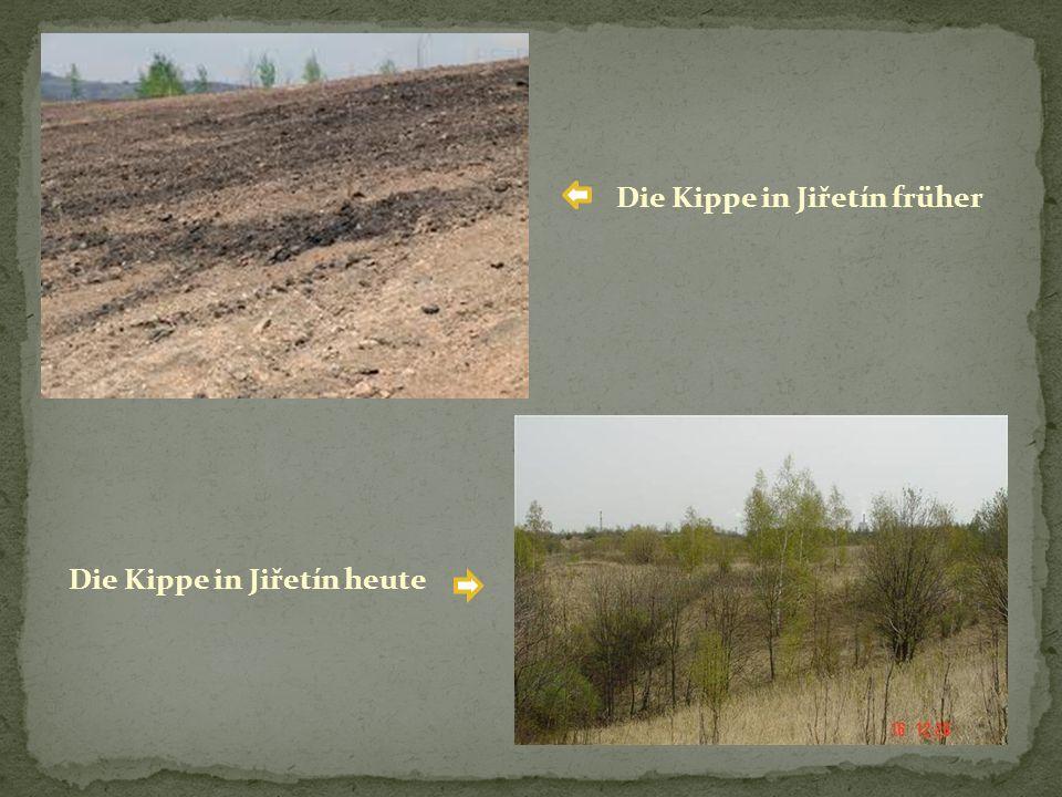 Die Kippe in Jiřetín früher Die Kippe in Jiřetín heute