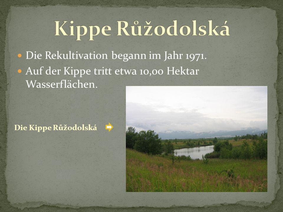 Die Rekultivation begann im Jahr 1971. Auf der Kippe tritt etwa 10,00 Hektar Wasserflächen. Die Kippe Růžodolská
