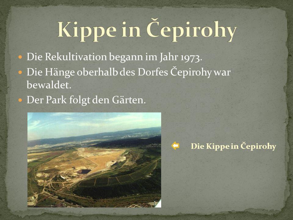 Die Rekultivation begann im Jahr 1973. Die Hänge oberhalb des Dorfes Čepirohy war bewaldet.