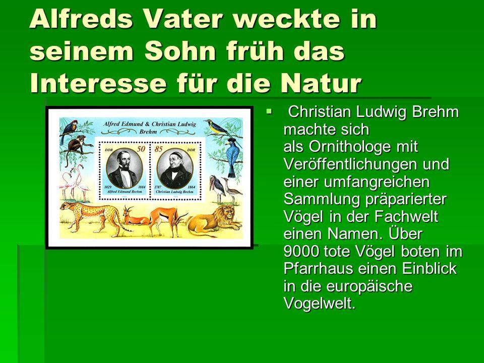 Alfreds Vater weckte in seinem Sohn früh das Interesse für die Natur  Christian Ludwig Brehm machte sich als Ornithologe mit Veröffentlichungen und einer umfangreichen Sammlung präparierter Vögel in der Fachwelt einen Namen.