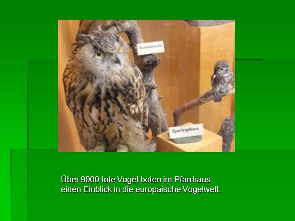 Über 9000 tote Vögel boten im Pfarrhaus einen Einblick in die europäische Vogelwelt.