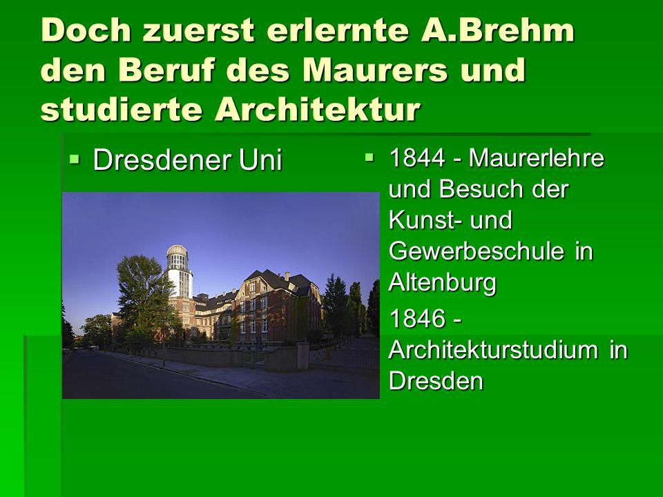 Doch zuerst erlernte A.Brehm den Beruf des Maurers und studierte Architektur  Dresdener Uni  1844 - Maurerlehre und Besuch der Kunst- und Gewerbeschule in Altenburg  1846 - Architekturstudium in Dresden