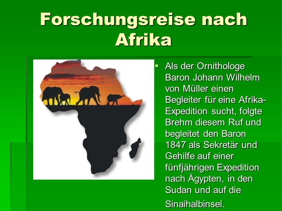 Forschungsreise nach Afrika  Als der Ornithologe Baron Johann Wilhelm von Müller einen Begleiter für eine Afrika- Expedition sucht, folgte Brehm diesem Ruf und begleitet den Baron 1847 als Sekretär und Gehilfe auf einer fünfjährigen Expedition nach Ägypten, in den Sudan und auf die Sinaihalbinsel.