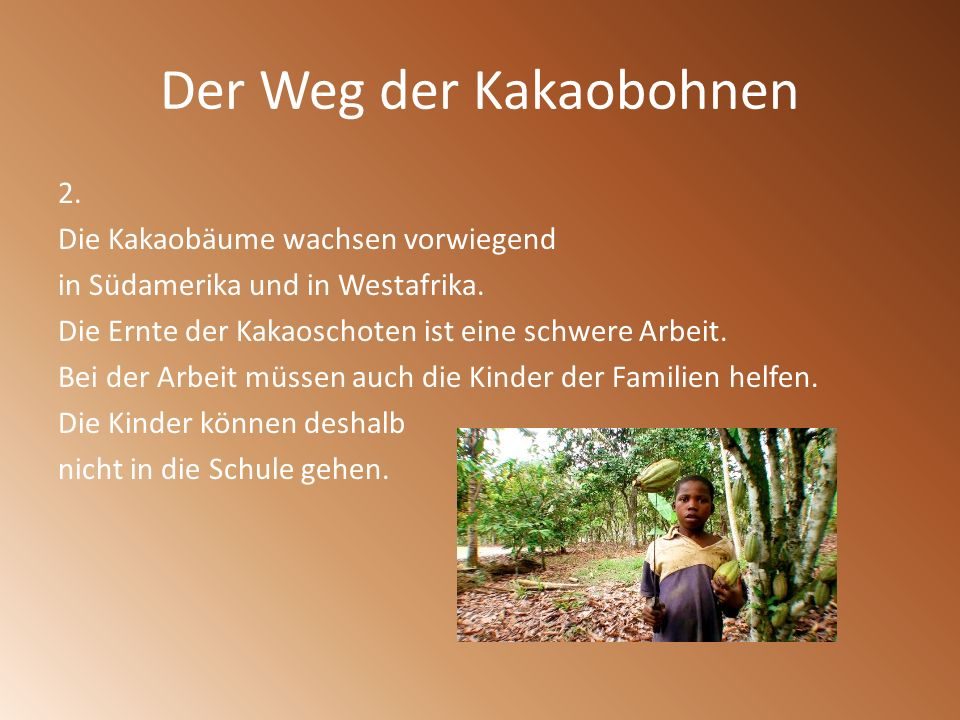 Der Weg der Kakaobohnen 2. Die Kakaobäume wachsen vorwiegend in Südamerika und in Westafrika. Die Ernte der Kakaoschoten ist eine schwere Arbeit. Bei