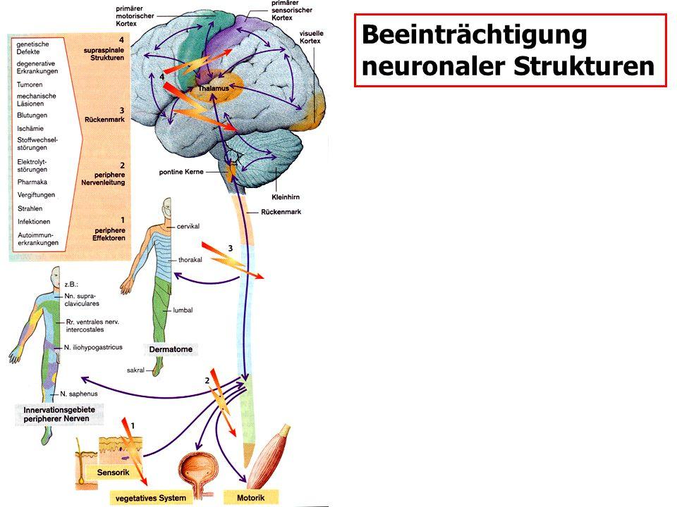 Beeinträchtigung neuronaler Strukturen