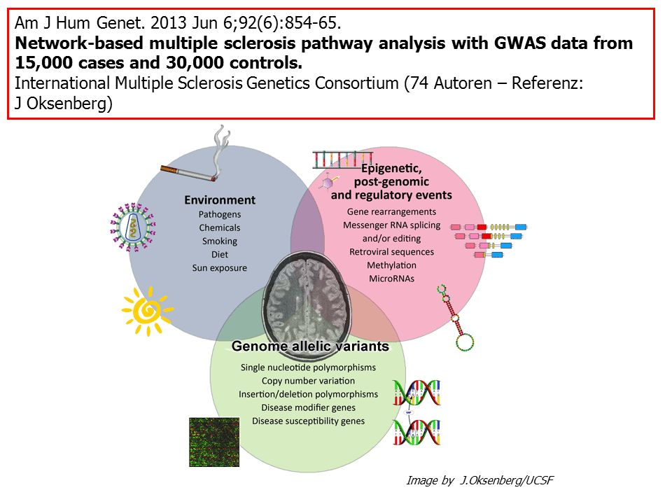 Am J Hum Genet. 2013 Jun 6;92(6):854-65. Network-based multiple sclerosis pathway analysis with GWAS data from 15,000 cases and 30,000 controls. Inter