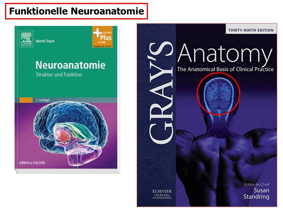 Funktionelle Neuroanatomie, enthaltene Transmitter: Neurophysiologie-Grundlagen