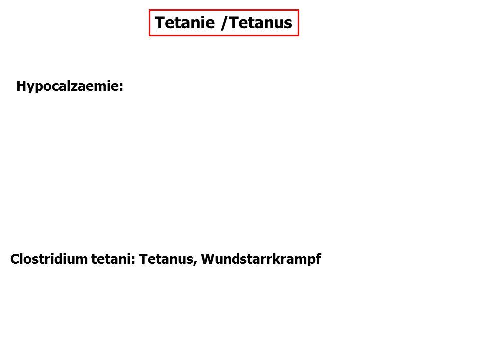 Tetanie /Tetanus Hypocalzaemie: Clostridium tetani: Tetanus, Wundstarrkrampf