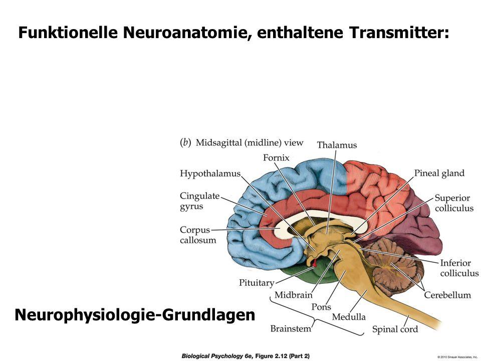 Pathophysiologie der Nervenzelle