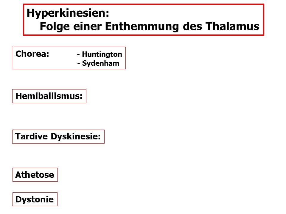 Hyperkinesien: Folge einer Enthemmung des Thalamus Chorea: - Huntington - Sydenham Hemiballismus: Tardive Dyskinesie: Athetose Dystonie