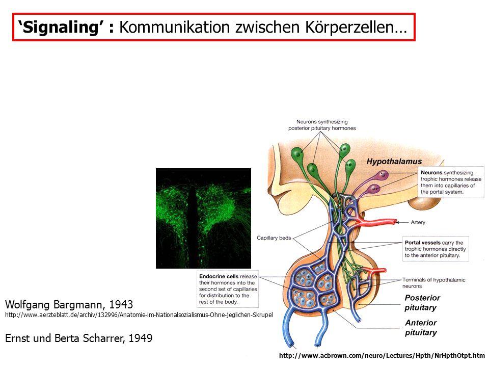 'Signaling' : Kommunikation zwischen Körperzellen… Wolfgang Bargmann, 1943 http://www.aerzteblatt.de/archiv/132996/Anatomie-im-Nationalsozialismus-Ohn