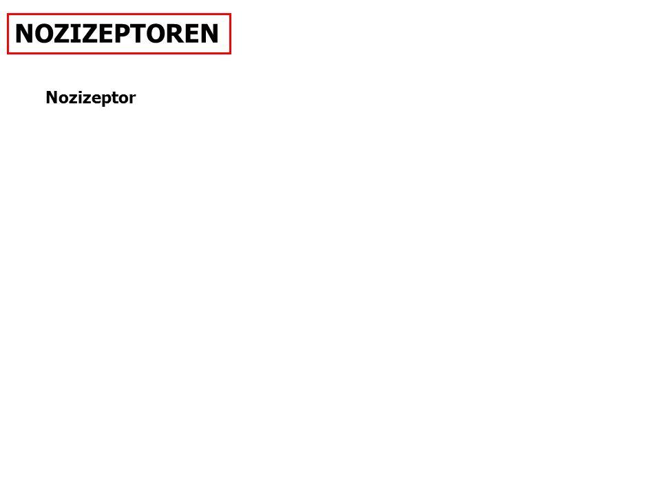 Nozizeptor NOZIZEPTOREN