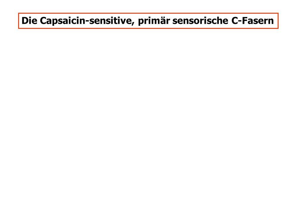 Die Capsaicin-sensitive, primär sensorische C-Fasern