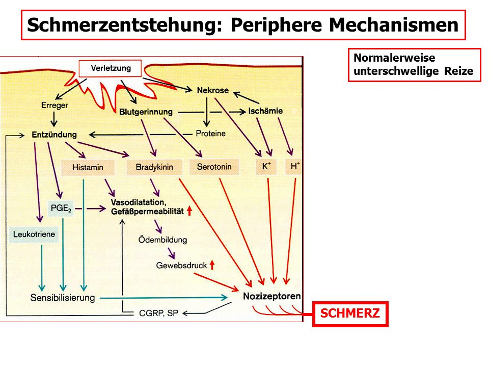 Schmerzentstehung: Periphere Mechanismen SCHMERZ Normalerweise unterschwellige Reize