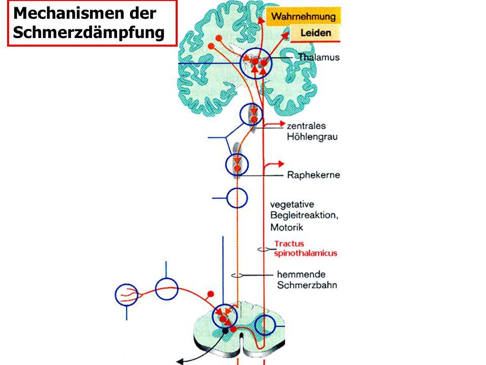 Mechanismen der Schmerzdämpfung Aspirin Lokal- anaesthetika: