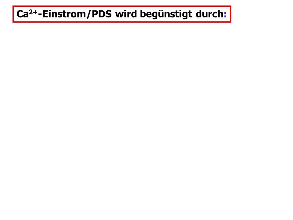 Ca 2+ -Einstrom/PDS wird begünstigt durch: