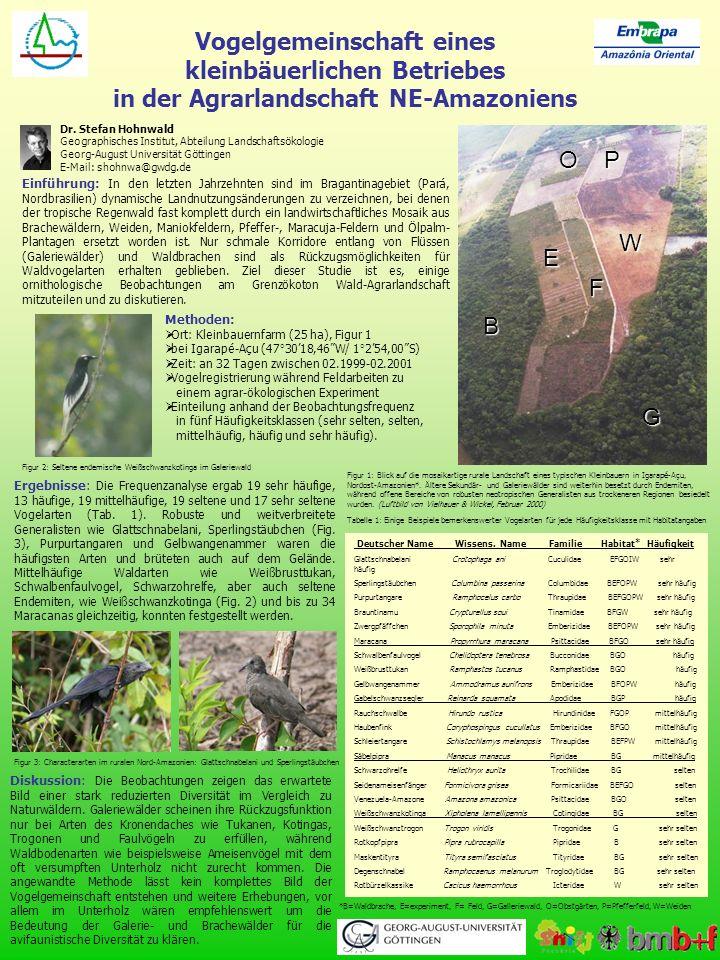 Vogelgemeinschaft eines kleinbäuerlichen Betriebes in der Agrarlandschaft NE-Amazoniens Dr. Stefan Hohnwald Geographisches Institut, Abteilung Landsch