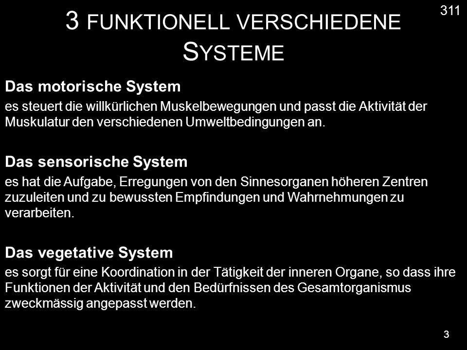 3 FUNKTIONELL VERSCHIEDENE S YSTEME 3 311 Das motorische System es steuert die willkürlichen Muskelbewegungen und passt die Aktivität der Muskulatur den verschiedenen Umweltbedingungen an.
