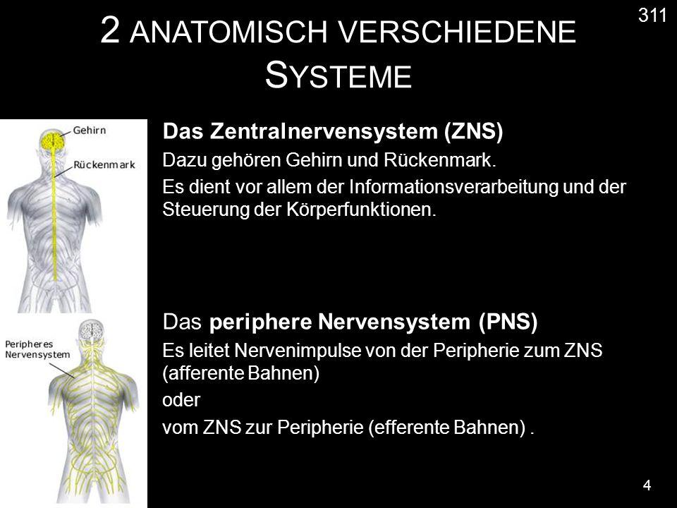 2 ANATOMISCH VERSCHIEDENE S YSTEME 4 311 Das Zentralnervensystem (ZNS) Dazu gehören Gehirn und Rückenmark. Es dient vor allem der Informationsverarbei