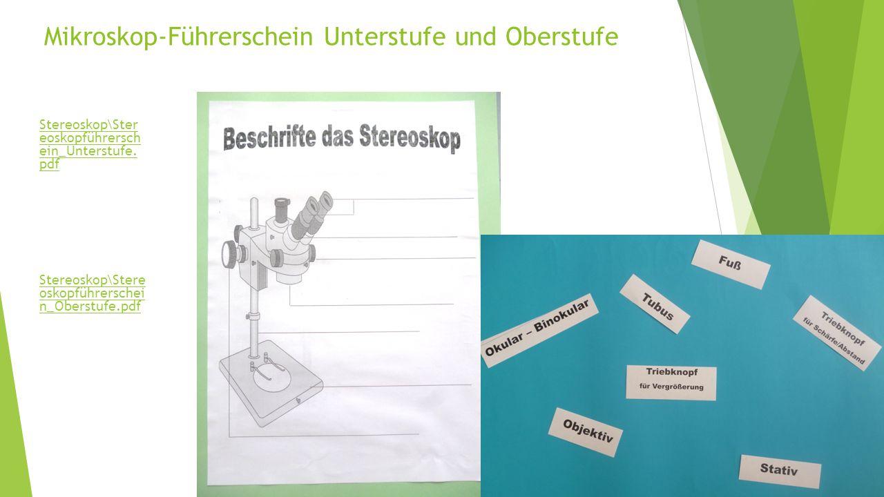 Mikroskop-Führerschein Unterstufe und Oberstufe Stereoskop\Ster eoskopführersch ein_Unterstufe.