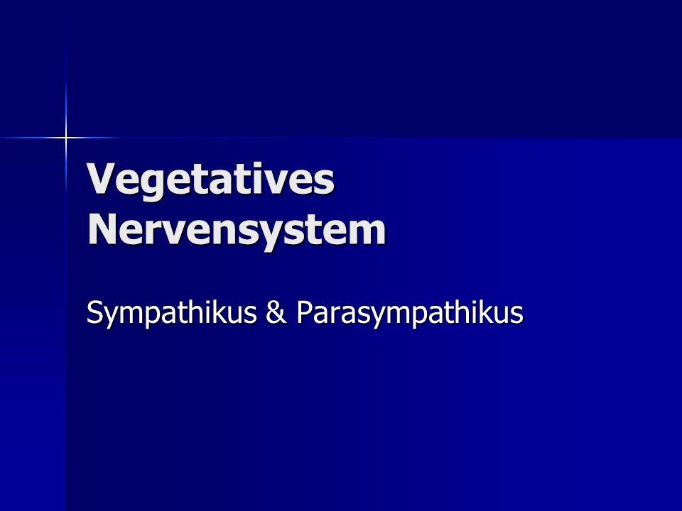 Vegetatives Nervensystem Sympathikus & Parasympathikus