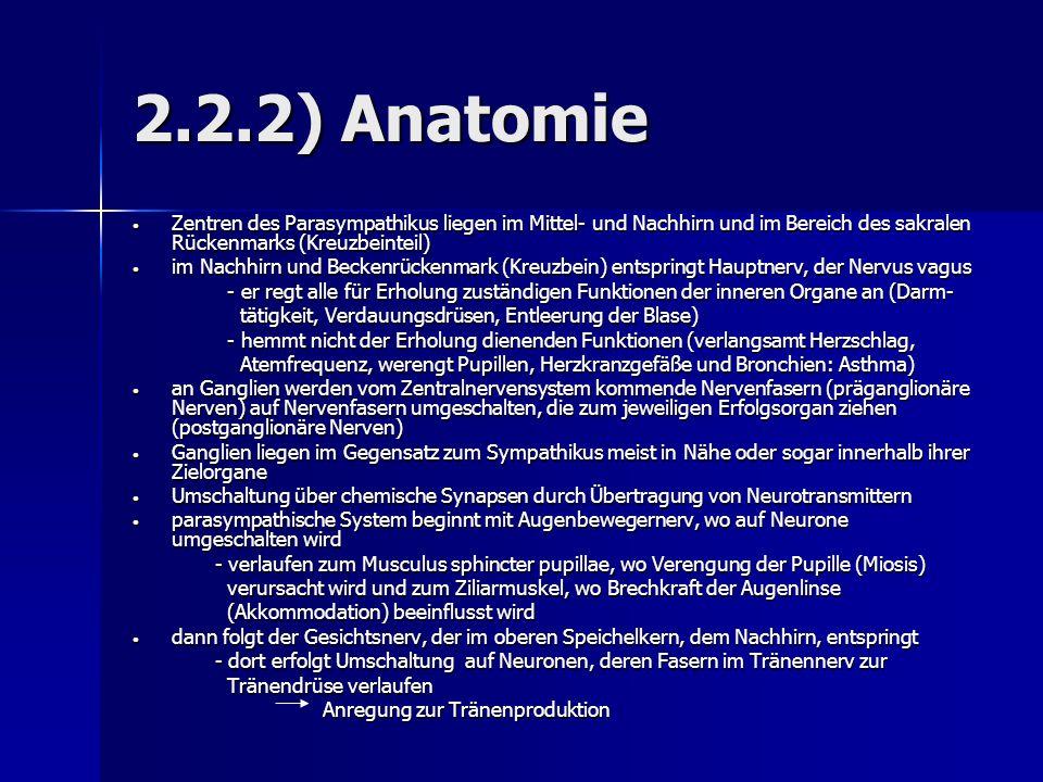 2.2.2) Anatomie Zentren des Parasympathikus liegen im Mittel- und Nachhirn und im Bereich des sakralen Rückenmarks (Kreuzbeinteil) Zentren des Parasym