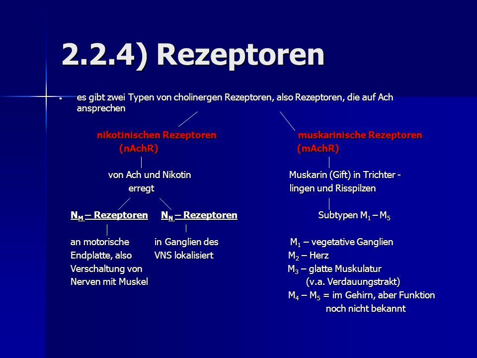2.2.4) Rezeptoren es gibt zwei Typen von cholinergen Rezeptoren, also Rezeptoren, die auf Ach ansprechen es gibt zwei Typen von cholinergen Rezeptoren, also Rezeptoren, die auf Ach ansprechen nikotinischen Rezeptoren muskarinische Rezeptoren nikotinischen Rezeptoren muskarinische Rezeptoren (nAchR) (mAchR) (nAchR) (mAchR) von Ach und Nikotin Muskarin (Gift) in Trichter - von Ach und Nikotin Muskarin (Gift) in Trichter - erregt lingen und Risspilzen erregt lingen und Risspilzen N M – Rezeptoren N N – Rezeptoren Subtypen M 1 – M 5 N M – Rezeptoren N N – Rezeptoren Subtypen M 1 – M 5 an motorische in Ganglien des M 1 – vegetative Ganglien an motorische in Ganglien des M 1 – vegetative Ganglien Endplatte, also VNS lokalisiert M 2 – Herz Endplatte, also VNS lokalisiert M 2 – Herz Verschaltung von M 3 – glatte Muskulatur Verschaltung von M 3 – glatte Muskulatur Nerven mit Muskel (v.a.
