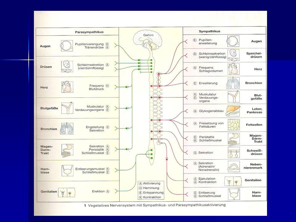 Ziemlich Hauptorgane Des Nervensystems Galerie - Anatomie und ...